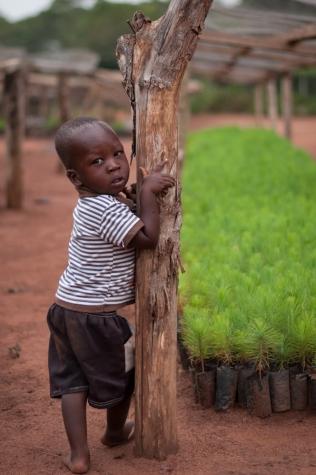Plantskola, Kikonda